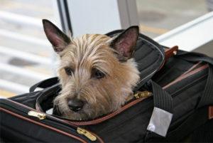 Правила перевозки животных авиалиниями по России и миру
