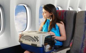 Правила перевозки собак в самолете разными авиалиниями